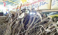Die Kava-Wurzel wird meist mit heißem Wasser aufgegossen.