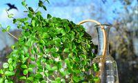 Mit verschiedenen Tricks kann man die Bewässerung seiner Pflanzen auch in Urlaubszeiten sichern.