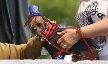 Mugly, der hässlichste Hund der Welt