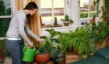 Junge Frau giesst Blumen in der Wohnung