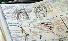 Studiengebuehren Keine Einhebung MedizinUni