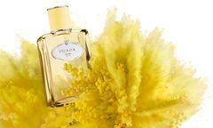 """""""Infusion  Mimosa"""" von Prada  (100 ml um 114 Euro). / Bild: (c) Beigestellt"""