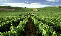 Themenbild: Weinanbau in der Champagne  / Bild: Imago