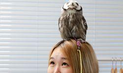 Eulen streicheln. Im Ikefukuro kacken die putzigen Tiere den Gästen auch auf den Kopf. / Bild: (c) Lena Schnabl