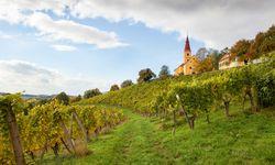 Würze. Im steirischen Vulkanland: mineralische Böden.  / Bild: (c) Winzer Vulkanland Steiermark