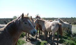 Camargue: Pferde, Stiere - und das Licht. / Bild: (c) C.Mouton/CRTCentreValdeLoire