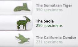 Lacoste: Je weniger weniger Tiere einer bestimmten Spezies vorhanden sind, desto weniger Polo-Shirts werden aufgelegt / Bild: (c) Screenshot youtube