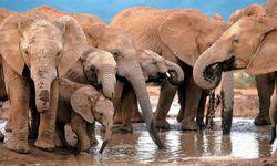 """Ehrenrettung der Elefanten im Etosha-Nationalpark Namibias sowie anderer vom US-Präsidenten verunglimpfter Orte in Afrika folgte auf Trumps """"Shithole""""-Sager. / Bild: (c) EPA (Jon Hrusa)"""