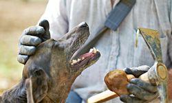 Allez! Trüffelhändler Eric Jaumard weiß, wie man Hunde motiviert. / Bild: (c) Beigestellt