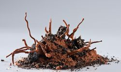 Das Dessert Roots von 2008. / Bild: (c) Francesc Guillamet
