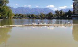 Zumindest 13  Enten: Sind das alle Zootiere? / Bild: (c) Beigestellt