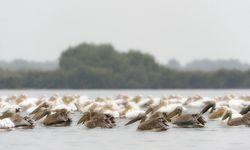 Rosapelikane am Donaudelta / Bild: Imago