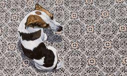 Guel (Jagdhunde), 2009 / Bild: Ana Elisa Egreja