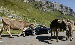 Ein Road Trip, bei dem man fast die ganze Schweiz entdeckt. / Bild: Reuters