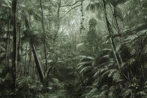 Regenwald. Cássio Vasconcellos rekonstruiert das Gefühl der Faszination bei der Begegnung mit dem Unbekannten.