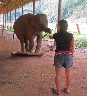 Ein Elefant beim Test.