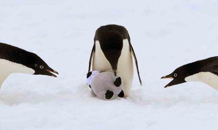 Pinguine partnersuche Partnersuche pinguine, Neziskový server pro podporu Linuxu, UNIXu a free-software.