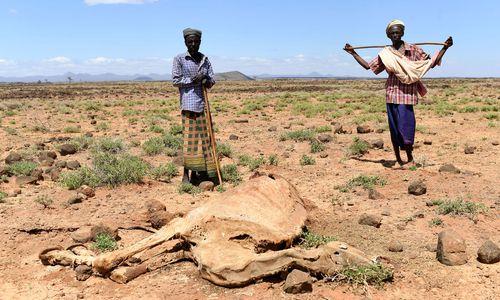 Für die Nomaden in Marsabit ist Dürre mehr als biblische Plage [premium]