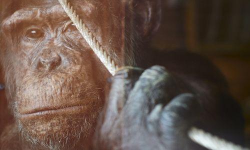 Der Mensch, die Moral und das liebe Tier [premium]