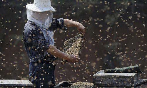 Honig: Fast 40 Prozent der EU-Importe kommen aus China