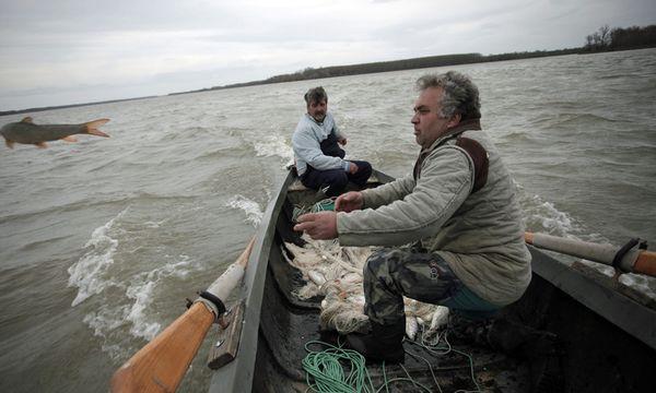 Stoisches Warten auf den Fang: Walentin Wojkow und Plamen Wakonow (links) haben ihr Netz in die Donau. / Bild: (c) Valentina Petrowa