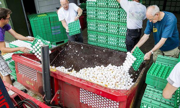 Entsorgung von Eiern in den Niederlanden / Bild: (c) APA/AFP/ANP/PATRICK HUISMAN (PATRICK HUISMAN)
