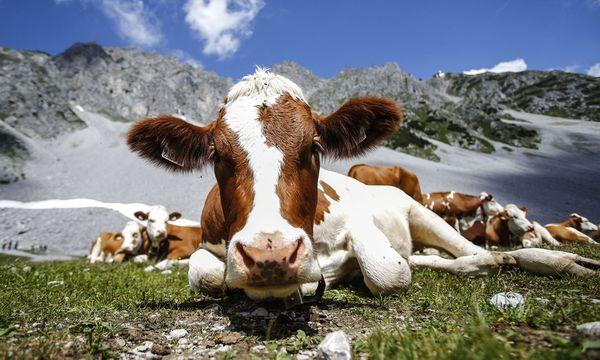 Die heimischen Bauern könnten von Kürzungen des EU-Budgets betroffen sein. / Bild: (c) REUTERS (Dominic Ebenbichler)