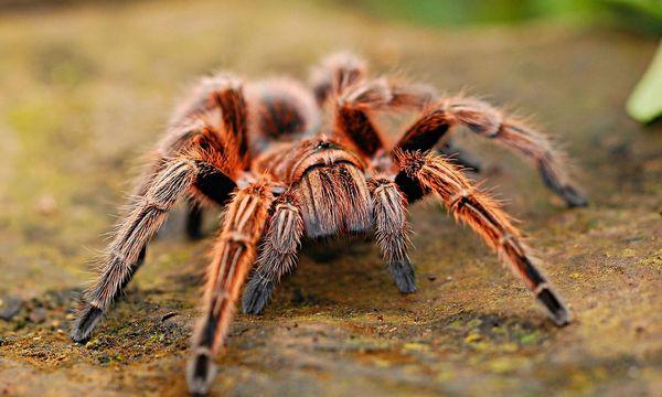 Bild: Auch die Angst vor Spinnen lässt sich überwinden. Die Autorin hat es geschafft. Viel einfacher ist aber ein Motivationsschreiben. Foto: Pixabay