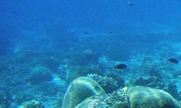 Symbolbild Meeresgrund / Bild: (c) Www.BilderBox.com