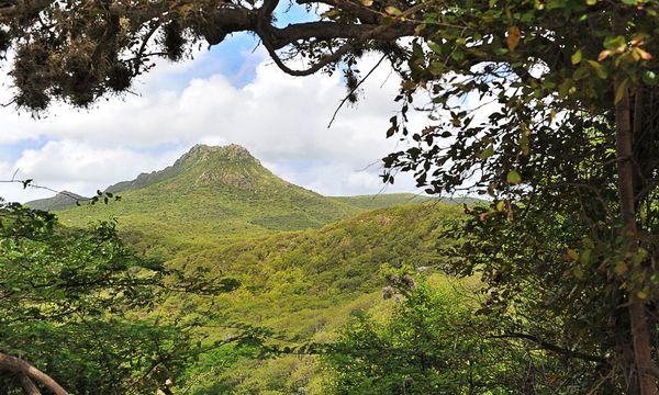 (c) Curaçao Tourist Board  Karge Flora. Der Christoffelpark  ist mit 2300  Hektar der größte Nationalpark von Curaçao.