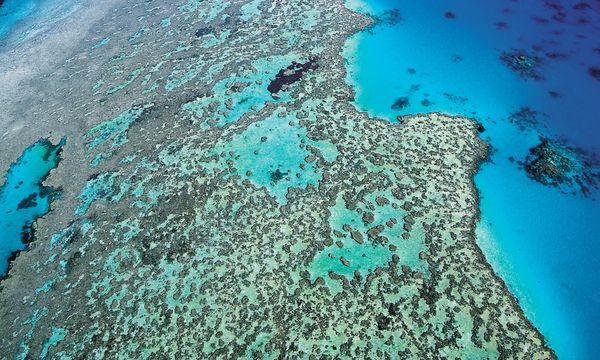 (c) AP PhotoQueensland Tourism Gigantisch. Das Great Barrier Reef ist mit mehr als 2300 Kilometern Länge das größte Riff der Erde.