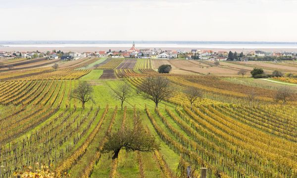 Blick ins Burgenland / Neusiedler See / Bild: (c) imago/allOver (KTH)