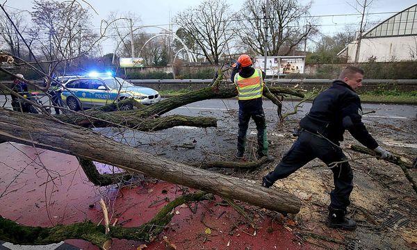 Sturm Burglind lässt im Westen Deutschlands Bäume umstürzen. / Bild: APA/AFP/dpa/OLIVER BERG
