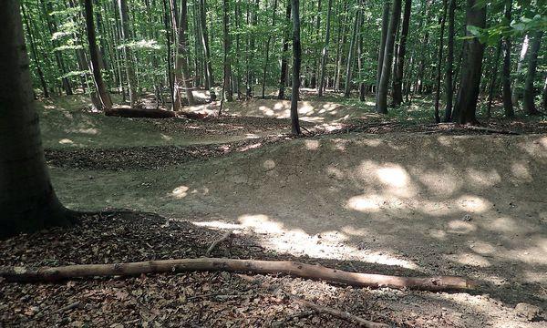Der Flow-Trail führt ähnlich einer Kugelbahn durch den Wald / Bild: Benedikt Kommenda