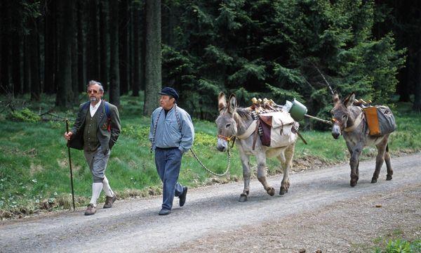 Wandergruppe mit Eseln  / Bild: (c) imago/Harald Lange (imago stock&people)