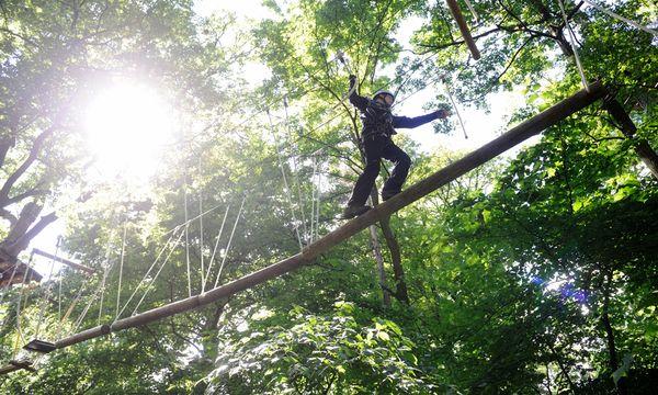 Im Waldseilpark können Besucher über sich selbst hinausklettern.  / Bild: (c) Die Presse (Clemens Fabry)