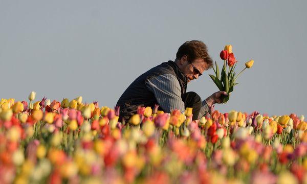 Manche erinnert der Bitcoin-Boom an die Tulpen-Blase  / Bild: APA/dpa/Felix Kästle