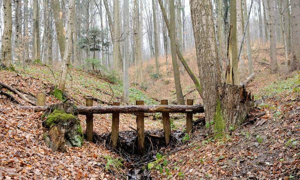 Im Wienerwald, nahe dem Ursprung der Kalten Wien. / Bild: Die Presse