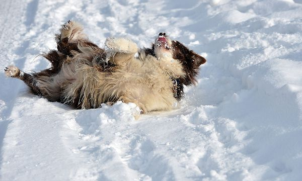Schnee en masse gibt es derzeit im Süden und Osten des Landes. / Bild: (c) APA/BARBARA GINDL (BARBARA GINDL)