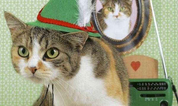 Katze mit Tirolerhut / Bild: (c) imago stock&people (imago stock&people)