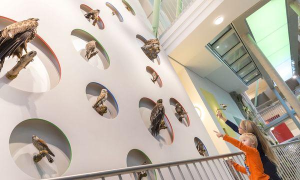 Im Haus der Natur in St. Pölten können heimische Vogelarten entdeckt werden. / Bild: (c) Theo Kust/www.imagefoto.at
