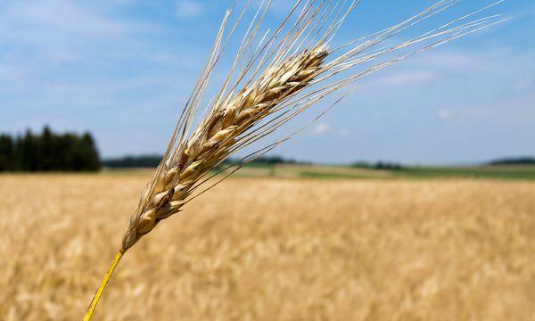 Um die Menschheit auch künftig ernähren zu können, müssten sich die Großen im Geschäft zusammentun, meint Bayer. / Bild: (c) imago/blickwinkel (imago stock&people)