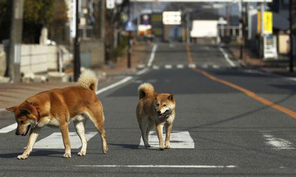Bild: (c) AP (Hiro Komae)