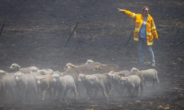 Buschbrände wüten in mehreren australischen Bundesstaaten, wie hier in New South Wales. / Bild: (c) EPA (LUKAS COCH)