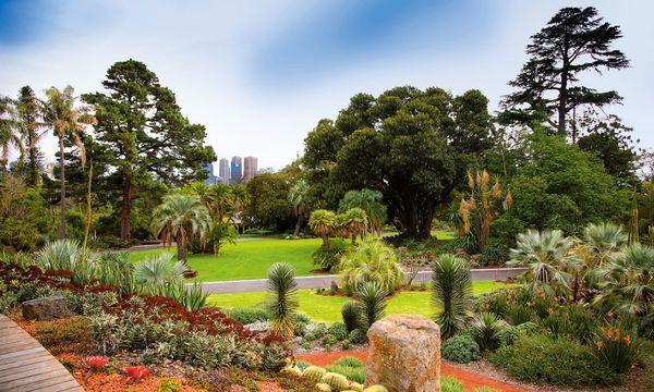 Courtesy of Royal Botanic Gardens Victoria Melbourne. Auf 38 Hektar lässt die australische Stadt der Pflanzenvielfalt der Erde großzügig Platz, um ihre Pracht zu zeigen: Wander- und Radwege durchziehen das Gelände, auf dem zwischen Seen und Hügeln bis zu 52.000 Pflanzenarten gesammelt wurden. 1846 wurde der Botanische Garten eröffnet, als Forschungs garten, der inzwischen auch als Parkanlage fungiert.