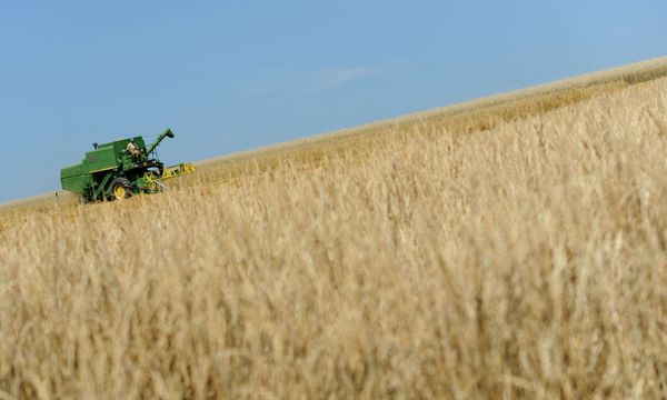 Weizenernte (Themenbild) / Bild: APA/HELMUT FOHRINGER