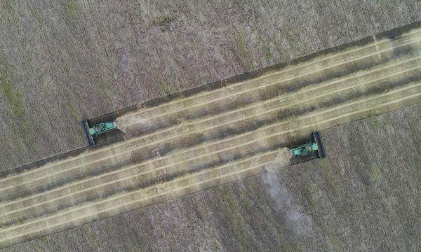 Agrochemische Produkte wie Glyphosat ermöglichen ertragreiche, aber ökologisch problematische Monokulturen.  / Bild: (c) REUTERS (ILYA NAYMUSHIN)