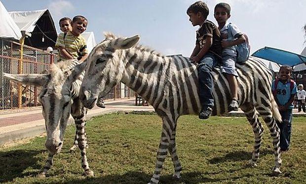 Palästinensische Kinder reiten auf einem falschen Zebra im Marah Land Zoo.