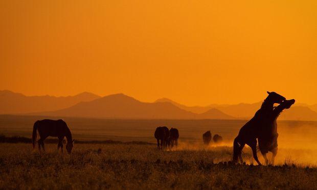 Universum: Namibia