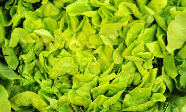 Bisher wurden 197 Krankheitsfälle registriert - der Grund: verunreinigter Romana-Salat